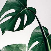 Подобрать постеры с листьями для интерьера
