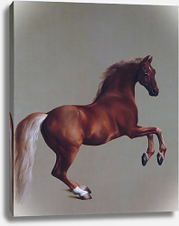 Постер Стаббс Джордж Уистлджакет (Whistlejacket)