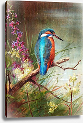 Постер A kingfisher resting