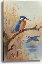 Постер A pair of kingfishers
