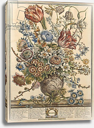 Постер Кастилс Питер March, from 'Twelve Months of Flowers' by Robert Furber engraved by Henry Fletcher 2
