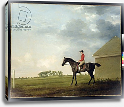 Постер Стаббс Джордж Gimcrack with John Pratt up on Newmarket Heath, 1765