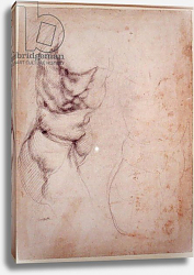 Постер Микеланджело (Michelangelo Buonarroti) Study of torso and buttock