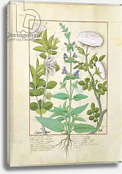 Постер Тестард Робинет (бот) Ms Fr. Fv VI #1 fol.133v Honeysuckle, Sage and Rose, c.1470