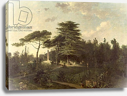 Постер Хауель Жан The Cedar of Lebanon in the Jardin des Plantes