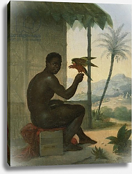 Постер Таунай Николя Brazilian negro with Tropical Bird