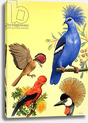 Постер Дэвис Р. (жив, дет) Nature Wonderland: Birds with Crowns, 1970