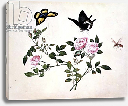 Постер Школа: Китайская 18в. PD.273-1973 Roses in Bud and Bloom with Butterflies and Insects