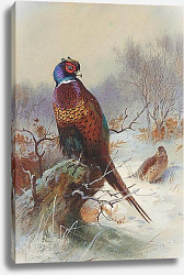 Постер A pair of pheasants