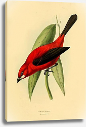 Постер Crimson Tanager