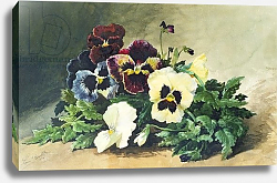 Постер Бомблд Луи Winter Pansies, 1884
