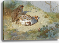Постер A pair of partridges on a sandy bank