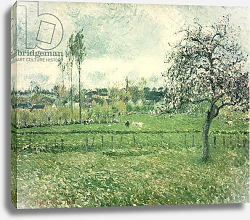 Постер Писсарро Камиль (Camille Pissarro) Meadow at Eragny, 1885