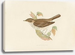 Постер Thrush Nightingale 2