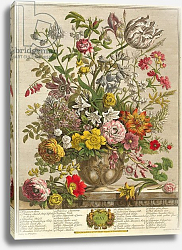 Постер Кастилс Питер May, from 'Twelve Months of Flowers' by Robert Furber engraved by Henry Fletcher