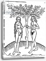 Постер Школа: Английская 15в Adam and Eve, illustration from the 'Speculum Vitae Christi', 1491
