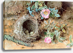 Постер Хант Уильям Wild Roses and Birds' Nests