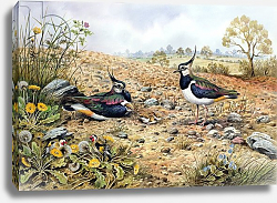 Постер Даннер Карл (совр) Lapwing Family with Goldfinches