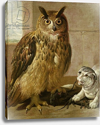 Постер Роос Йоханн Eagle Owl and Cat with Dead Rats
