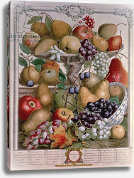 Постер Кастилс Питер November, from 'Twelve Months of Fruits', by Robert Furber engraved by James Smith, 1732
