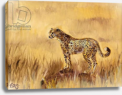Постер Сандерс Франческа (совр) Cheetah in grass 1, 2013,