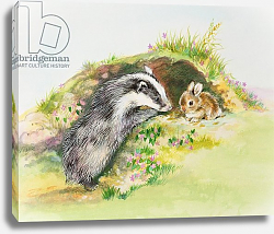 Постер Мэттьюз Диана (совр) Badger and a Rabbit