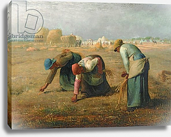 Постер Милле, Жан-Франсуа The Gleaners, 1857
