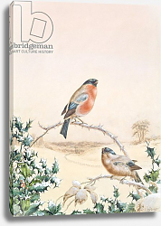 Постер Брайт Анри Winter scene with Chaffinch and Holly