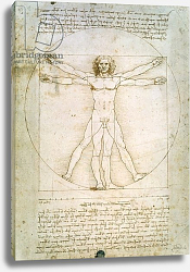 Постер Леонардо да Винчи (Leonardo da Vinci) The Proportions of the human figure, c.1492