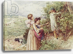Постер Фостер Майлз  Биркет Children picking blackberries, 19th century