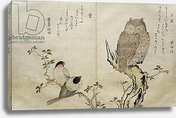 Постер Утамаро Китагава An Owl and two Eastern Bullfinches