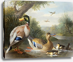 Постер Богдани Якоб Ducks in a River Landscape