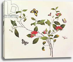 Постер Школа: Китайская 19в. Plant Study with Butterflies and Insects, c.1800