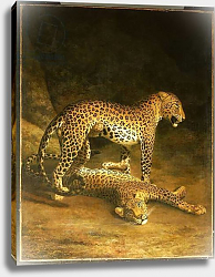 Постер Агассе Жак Two Leopards lying in the Exeter Exchange, 1808