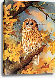Постер British Birds - Tawny Owl