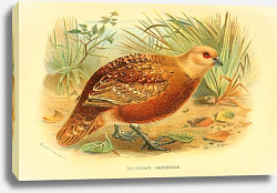 Постер Mountain Partridge