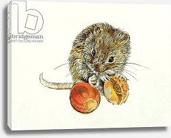 Постер Мэттьюз Диана (совр) Vole with an Acorn