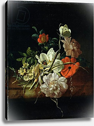 Постер Руйш Рейчел Still Life with Flowers 6