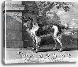 Постер The New Chien Savant, or Learned Dog, print made by F-Morellon la Cave, 1752