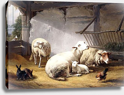 Постер Веррбекховен Евген Sheep, Rabbits and a Chicken in a Barn, 1859