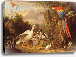 Постер Богдани Якоб A Macaw, Ducks, Parrots and Other Birds in a Landscape, c.1708-10
