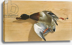 Постер Башлир Жан A duck on a pine board, 1753