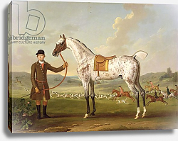 Постер Спенсер Томас Scipio, Colonel Roche's Spotted Hunter, c.1750