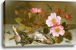 Постер Аст Балтазар Still life depicting flowers, shells and a dragonfly