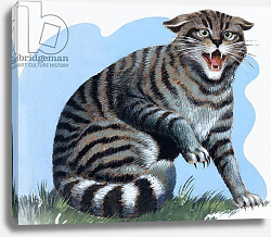 Постер Дэвис Р. (жив, дет) Wild Cat, from 'Treasure', 1966