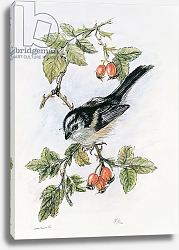 Постер Хилл Нейл Long-tailed tit and rosehips