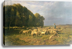 Постер Жак Шарль Эмиль Flock of Sheep in a Landscape