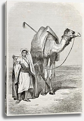 Постер Boy holding camel's reins. Created by Pottin, published on Le Tour du Monde, Paris, 1864