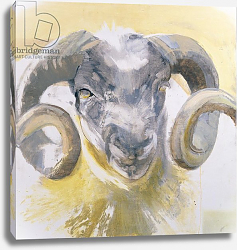 Постер Гиббс Лоу (совр) Long Horn Sheep