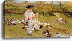 Постер Джонсон Эдвард Feeding the ducks